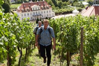 Wandern & Wein
